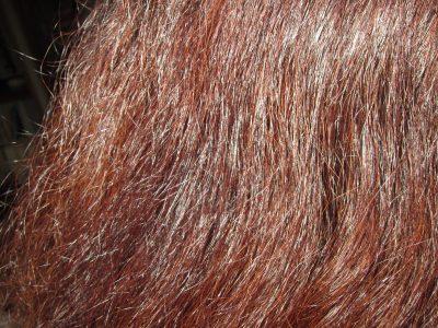 2016.8.15洗髪後 自然乾燥アップ